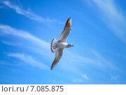Купить «Чайка в небе», фото № 7085875, снято 7 февраля 2015 г. (c) EugeneSergeev / Фотобанк Лори