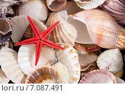 Купить «Морские ракушки и звезда», фото № 7087491, снято 17 апреля 2014 г. (c) Asja Sirova / Фотобанк Лори