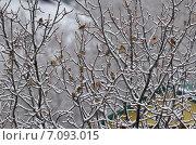 Купить «Щеглы прилетели», фото № 7093015, снято 8 марта 2015 г. (c) Карданов Олег / Фотобанк Лори