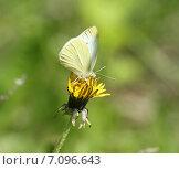 Бабочка на цветке. Стоковое фото, фотограф Вячеслав Волков / Фотобанк Лори