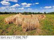 Рулоны сена лежат в поле в летний солнечный день. Стоковое фото, фотограф FotograFF / Фотобанк Лори
