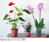 Купить «Живые комнатные растения в горшках», фото № 7111791, снято 9 марта 2015 г. (c) Володина Ольга / Фотобанк Лори