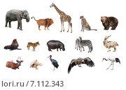 Купить «Коллаж из диких животных», фото № 7112343, снято 17 февраля 2019 г. (c) Наталья Волкова / Фотобанк Лори