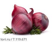 Купить «red onion and rosemary leaves», фото № 7119671, снято 5 февраля 2013 г. (c) Natalja Stotika / Фотобанк Лори