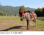 Купить «Грустный ослик в ковбойской шляпе», фото № 7120967, снято 25 июля 2012 г. (c) Марина Орлова / Фотобанк Лори