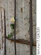 Купить «Берлинская стена, Берлин, Германия», фото № 7124531, снято 6 октября 2014 г. (c) Анастасия Улитко / Фотобанк Лори
