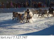 Гонки на оленьих упряжках в Воркуте (2012 год). Редакционное фото, фотограф Александр Брезденюк / Фотобанк Лори