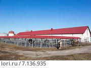 Купить «Бык-производитель на ферме», эксклюзивное фото № 7136935, снято 17 марта 2015 г. (c) Андрей Дегтярёв / Фотобанк Лори