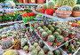 Цветы и кактусы в горшках в магазине OBI, Москва, фото № 7139687, снято 4 марта 2015 г. (c) Володина Ольга / Фотобанк Лори
