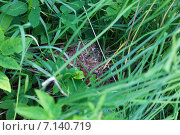 Купить «Гнездо пеночки», фото № 7140719, снято 6 июня 2012 г. (c) Василий Вишневский / Фотобанк Лори