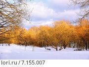 Пейзаж зимнего парка. Стоковое фото, фотограф Людмила Герасимова / Фотобанк Лори