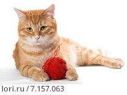 Рыжий кот лежит с клубком пряжи. Стоковое фото, фотограф Okssi / Фотобанк Лори