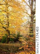 Купить «Осенний парк», фото № 7174403, снято 18 ноября 2014 г. (c) Татьяна Кахилл / Фотобанк Лори
