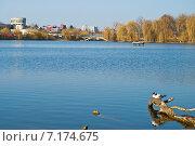 Чайки на озере на фоне урбанистического пейзажа. Стоковое фото, фотограф Николай Полищук / Фотобанк Лори