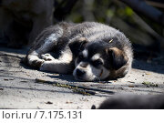 Брошенный щенок на улице. Стоковое фото, фотограф Илья Митрошин / Фотобанк Лори