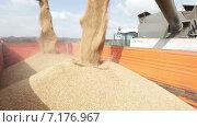 Зерно насыпают в кузов. Стоковое видео, видеограф R.I.Production / Фотобанк Лори