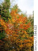 Купить «Осенний сезон», фото № 7184623, снято 18 ноября 2014 г. (c) Татьяна Кахилл / Фотобанк Лори