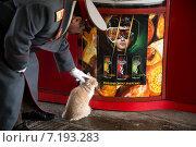 Купить «Мужчина в образе Сталина гладит рыжего кота на фоне рекламы энергетика в московском переходе», фото № 7193283, снято 29 марта 2015 г. (c) Николай Винокуров / Фотобанк Лори