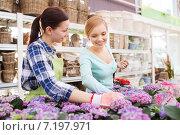 happy women choosing flowers in greenhouse. Стоковое фото, фотограф Syda Productions / Фотобанк Лори