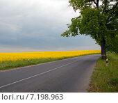 Купить «Дорога вдоль рапсового поля», эксклюзивное фото № 7198963, снято 15 октября 2018 г. (c) Svet / Фотобанк Лори