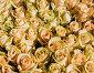 Букет  роз, фото № 7199395, снято 15 марта 2015 г. (c) Николай Коржов / Фотобанк Лори