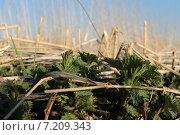 Молодая крапива. Стоковое фото, фотограф Елена Рыбкина / Фотобанк Лори