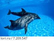 Купить «Дельфины плавают под водой», фото № 7209547, снято 25 июня 2012 г. (c) Andriy Bezuglov / Фотобанк Лори