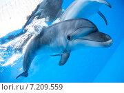 Купить «Дельфин плавает под водой», фото № 7209559, снято 25 июня 2012 г. (c) Andriy Bezuglov / Фотобанк Лори