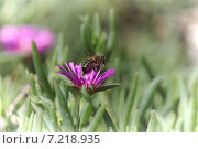 Пчела. Стоковое фото, фотограф Andrei Porubov / Фотобанк Лори