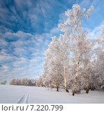 Декабрьский пейзаж с заиндевелым деревом на фоне синего неба. Стоковое фото, фотограф Фёдор Ветров / Фотобанк Лори