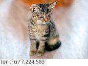 Двухмесячный полосатый котенок сидит на полу. Стоковое фото, фотограф Савчук Алексей / Фотобанк Лори