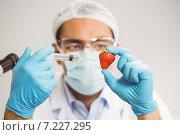 Купить «Food scientist injecting a strawberry», фото № 7227295, снято 29 июля 2014 г. (c) Wavebreak Media / Фотобанк Лори