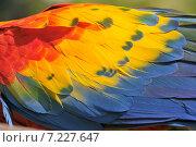 Купить «Scarlet Macaw (Ara macao) large and colorful macaw.Scarlet Macaw (ara macao), large and colorful macaw», фото № 7227647, снято 24 апреля 2019 г. (c) BE&W Photo / Фотобанк Лори
