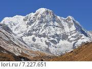 Купить «Nepal, Annapurna Conservation Area, Trek to Annapurna Base Camp in Nepal Himalaya», фото № 7227651, снято 20 июля 2019 г. (c) BE&W Photo / Фотобанк Лори