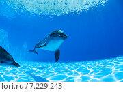 Купить «Дельфин в синей воде», фото № 7229243, снято 25 июня 2012 г. (c) Andriy Bezuglov / Фотобанк Лори