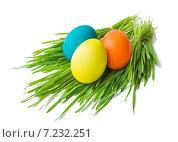 Раскрашенные пасхальные яйца на пучках травы. Стоковое фото, фотограф Анастасия Ульянова / Фотобанк Лори