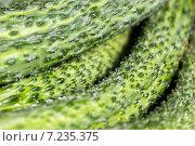 Купить «Зеленые пупырчатые огурцы, фон», фото № 7235375, снято 11 августа 2013 г. (c) Евгений Ткачёв / Фотобанк Лори