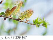 Купить «Пробуждение растений после долгой зимы», фото № 7239167, снято 20 июня 2019 г. (c) Валерий Трубицын / Фотобанк Лори
