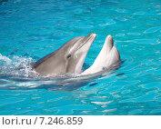 Купить «Пара танцующих дельфинов», фото № 7246859, снято 31 июля 2010 г. (c) Светогор Александр Романович / Фотобанк Лори