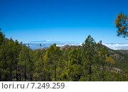 Купить «Гран Канария, Los Cumbres - самое высокое место на острове», фото № 7249259, снято 26 марта 2015 г. (c) Tamara Kulikova / Фотобанк Лори