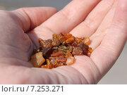 Купить «Мелкий янтарь в ладони», эксклюзивное фото № 7253271, снято 11 апреля 2015 г. (c) Шуньята Антонова / Фотобанк Лори