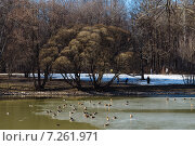 Приход весны. Стоковое фото, фотограф Андрей Губецков / Фотобанк Лори