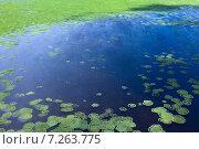 Купить «Поверхность озера, зарастающая травой, вид сверху», фото № 7263775, снято 8 июля 2013 г. (c) Владимир Мельников / Фотобанк Лори