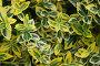 Желто-зеленый растительный фон из листьев, фото № 7264951, снято 27 июня 2009 г. (c) Олеся Ефименко / Фотобанк Лори
