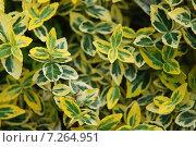 Желто-зеленый растительный фон из листьев. Стоковое фото, фотограф Олеся Ефименко / Фотобанк Лори