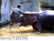 Купить «Балийский мужчина купает слона», фото № 7273319, снято 4 июля 2010 г. (c) Морозова Татьяна / Фотобанк Лори