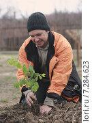 Мужчина сажает деревце. Стоковое фото, фотограф Ivanikova Tatyana / Фотобанк Лори