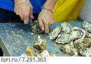 Close-up of worker opening oysters. Стоковое фото, фотограф Яков Филимонов / Фотобанк Лори