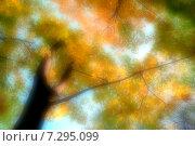 Купить «Размытый фон из осенних кленовых деревьев», фото № 7295099, снято 3 августа 2020 г. (c) Зезелина Марина / Фотобанк Лори