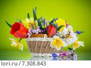 Купить «Букет весенних цветов в корзине на зеленом фоне», фото № 7308843, снято 24 апреля 2015 г. (c) Peredniankina / Фотобанк Лори